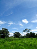 The green field of grass and the blue sky Stock Images