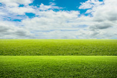 Green field of grass and blue sky Royalty Free Stock Photo