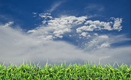 Green field, grass, blue sky and white clouds. Royalty Free Stock Photography