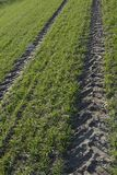 Green field. Field grass, green carpet, traversed by the wheel tracks Royalty Free Stock Photo