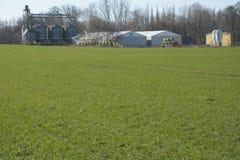 Green field. Field grass, green carpet, traversed by the wheel tracks Stock Photo