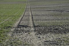 Green field. Field grass, green carpet, traversed by the wheel tracks Royalty Free Stock Photos