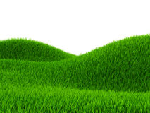 Green field of grass Stock Photography