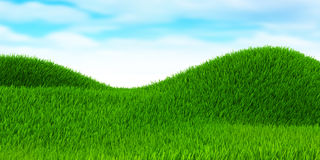 Green field of grass Stock Images