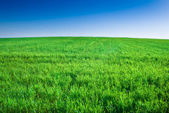 Green field of grass under blue sky stock photos