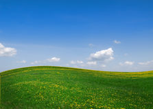 Green field of grass and yellow flowers. Under blue sky royalty free stock photos