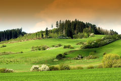 Green field and grazing sheep Stock Image