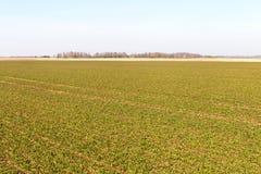 Green field. Stock Image