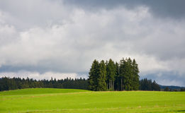 Green field and group of fir trees Royalty Free Stock Images