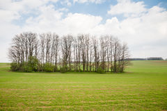 Green field and a group of trees Royalty Free Stock Photography