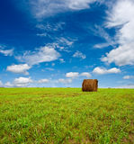 Green field with hay Royalty Free Stock Images