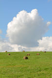 Green field  with hay bales Stock Images
