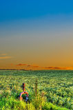 Green field in hdr Royalty Free Stock Images