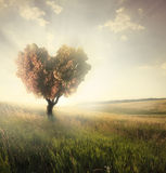 Green field with heart shape tree Royalty Free Stock Images