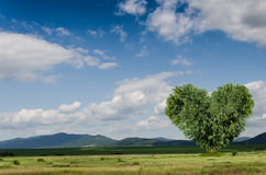 Green field and heart tree Stock Images