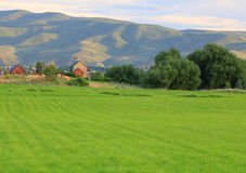 Green field in Heber Valley. Royalty Free Stock Photo