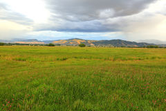 Green field in Heber Valley. Royalty Free Stock Photos