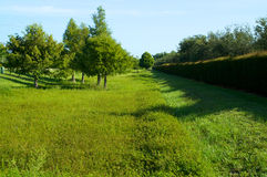 Green field with hedge in florida. Looking down an expanse of field of green grass with trees and manicured hedge along the edge Stock Images