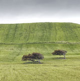 Green field. Green hill with two little trees with cloudy weather Royalty Free Stock Photo