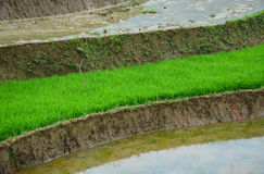 Green field at Hmong village in Sapa, Vietnam Royalty Free Stock Photography