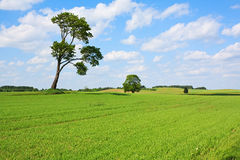Green Field Horticulture Stock Photos