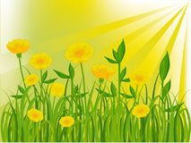 Free Green Field In Summer Stock Photography - 20097182