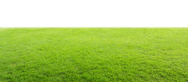 Green field. On isolated White background Stock Images