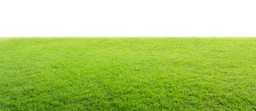 Green field isolated Stock Images