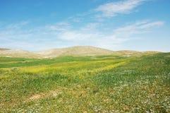 Green field landscape. Royalty Free Stock Image