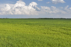 Green field landscape Royalty Free Stock Photo
