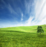 Green field landscape Stock Photography