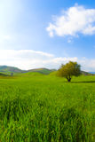 Green field landscape stock images