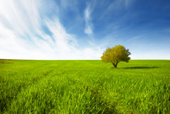Green field landscape Royalty Free Stock Image