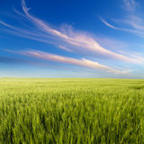Green field landscape, agricultural field Stock Photography