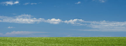 Green field landscape background with blue sky Stock Photo