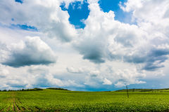 Green Field. Landscape with green field and blue sky Royalty Free Stock Photography
