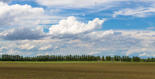 Green field. Landscape - Green field and blue sky with clouds, Serbia Royalty Free Stock Photos