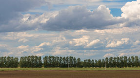 Green field. Landscape - Green field and blue sky with clouds, Serbia Royalty Free Stock Photo