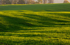 Green field landscape. At early springtime Royalty Free Stock Photo