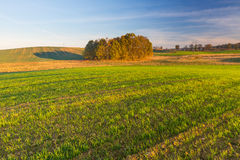 Green field landscape Royalty Free Stock Image