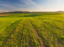 Green field landscape. At early springtime Stock Photos