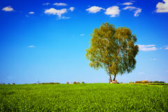 Green field landscape with a single tree. Royalty Free Stock Images