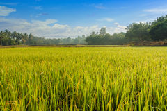 Green field landscape with the sky Royalty Free Stock Image