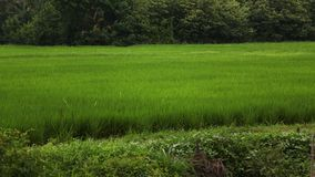 Green Field for landscape in thailand