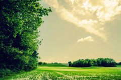 Green field landscape with trees and sunshine Royalty Free Stock Images