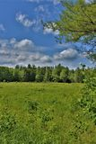 Green field located in Childwold, New York, United States. Green field of grass located in Childwold, New York, United States in the Adirondack Mountains Royalty Free Stock Images