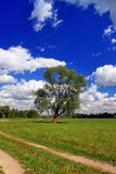 Green field with a lone tree. And a blue sky Royalty Free Stock Images