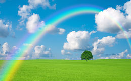 Green field with lone tree and rainbow Stock Photos