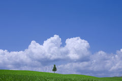 Green field and lonely tree Stock Photos
