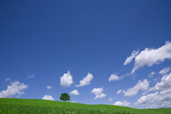 Green field and lonely tree Stock Images